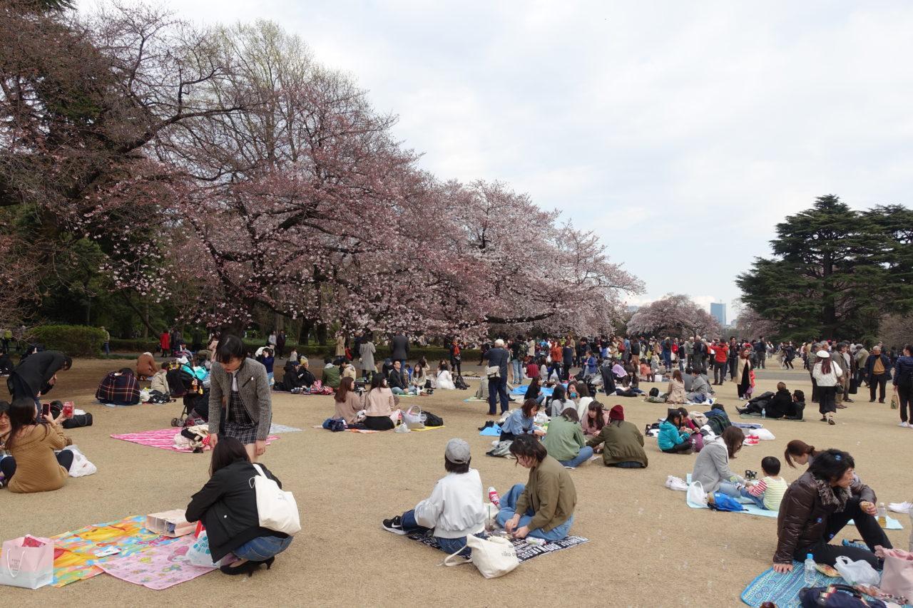 Tokyo Shinjuku Gyoen Park Cherry Blossom